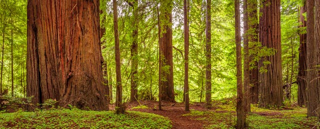 What Makes a School System Successful? Study the Redwoods