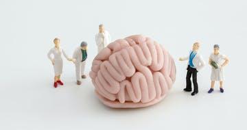Inside the Incubators: The Anatomy of a University Innovation Team
