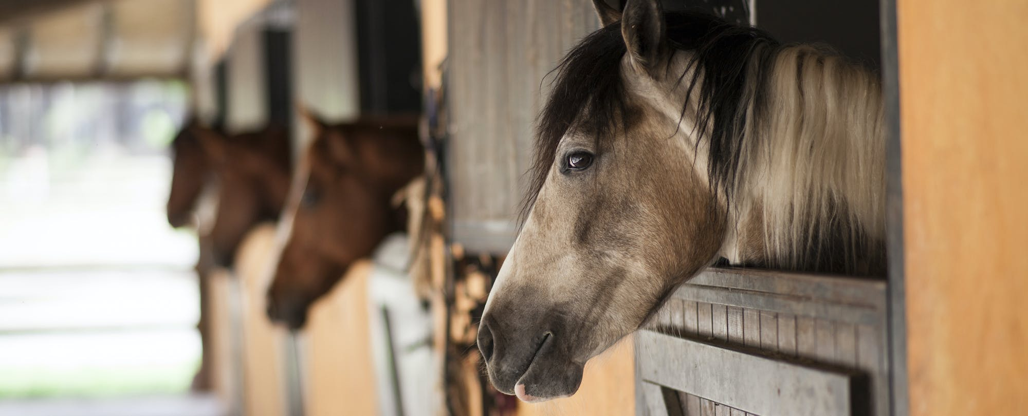 What a Horse With Heartburn Taught Me About Developing Student Passion and Autonomy