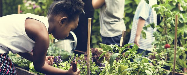 What's the Difference Between Project- and Challenge-Based Learning, Anyway?