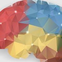 I'm a Neuroscientist. Here's How Teachers Change Kids' Brains.