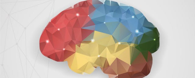 I'm a Neuroscientist  Here's How Teachers Change Kids