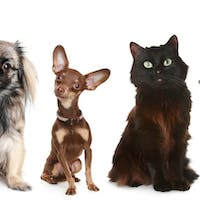'A Cat is Not a Dog' and Other Advice for Blended Learning Teachers