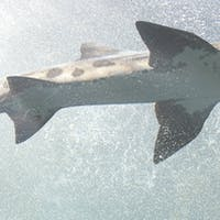 Sink or Swim: Which Professional Development Companies Survived EdSurge's Virtual Shark Tank?