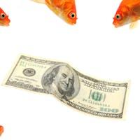New Markets' New Education Fund