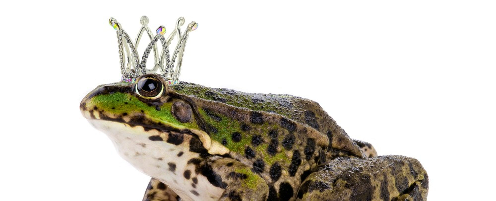 Kissing Frogs: How to Find the Right Courseware for Digital Learning