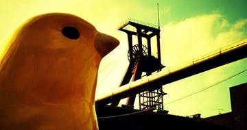 The Canary in the Law School Coal Mine
